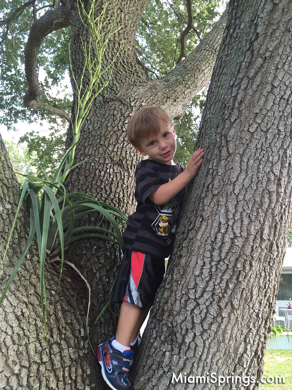 Climbing a tree in Miami Springs
