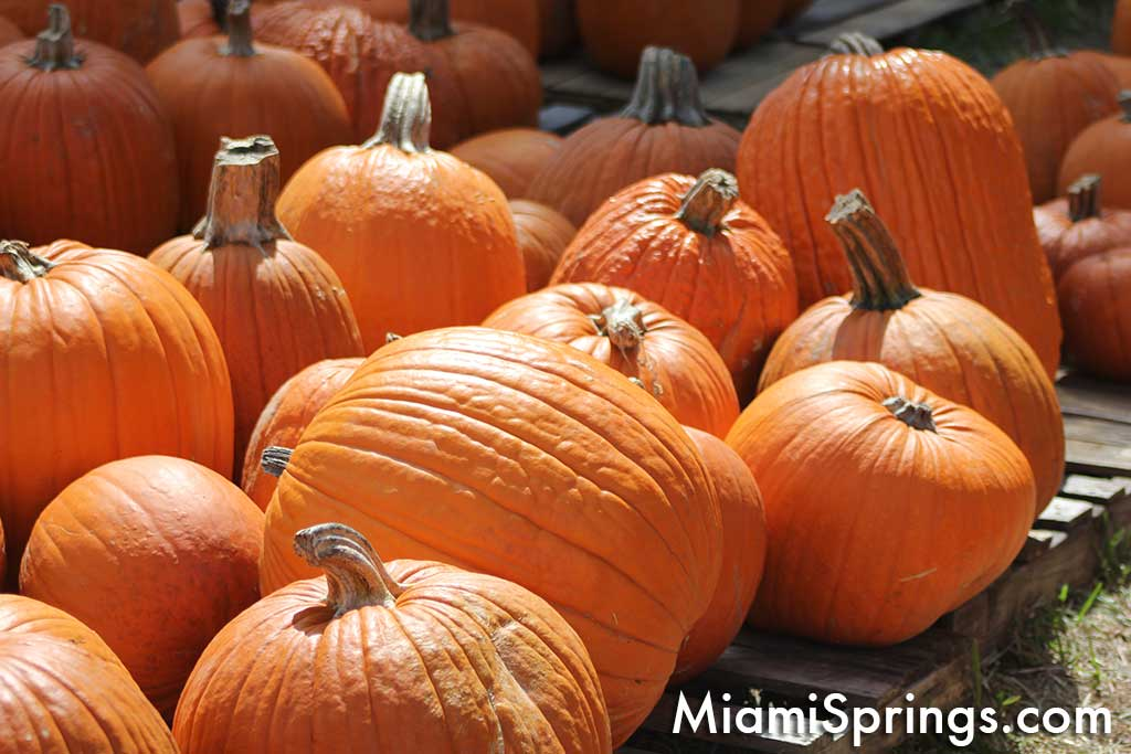 Pumpkin Patch and Harvest Festival